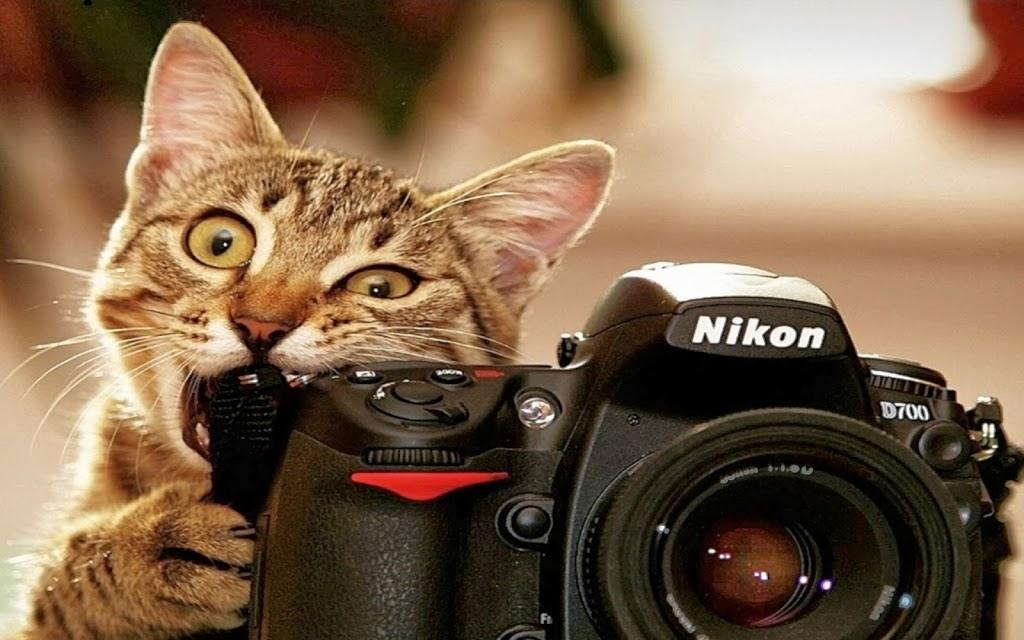 Mobil fotoğrafçılık hakkında… Alıntıdır…